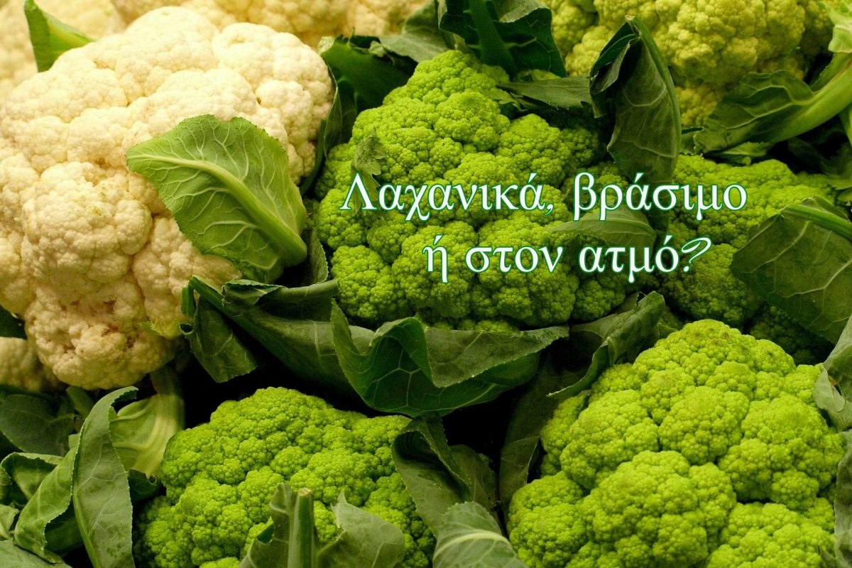 cabbage-3880944_1920(1)