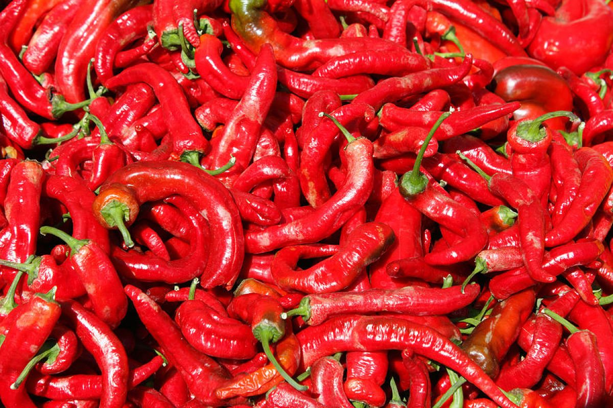 hot-red-peppers-in-the-summer-sun-lee-serenethos